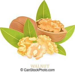 group of walnuts with green leaves for your design