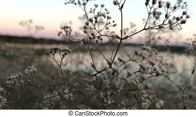 white blossoms amid the water and pink evening sky - small...