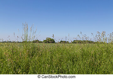 grass - bluegrass and cocksfoot with blue sky as background