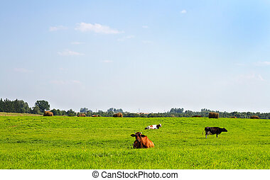 rural landscape with cows