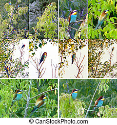 Beautiful birds bee-eaters on the branches of trees.