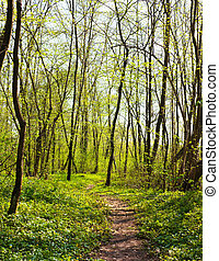 trail in the spring forest