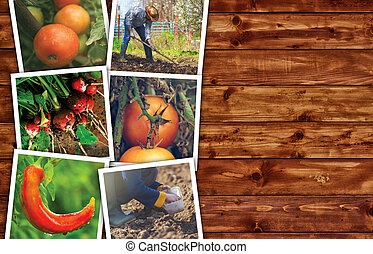 Homegrown vegetable photo collage on wooden background as...