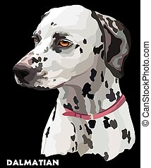 Coloful vector portrait of dalmatian - Colored portrait of...