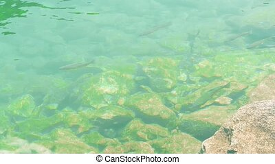 Fishes floating in shallow water on a sunny summer day