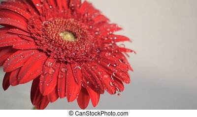 Water drops falling on a flower