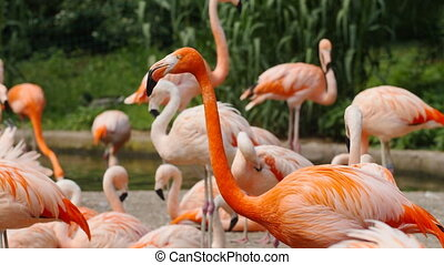 Flock of flamingos in the park - Flock of pink flamingos in...