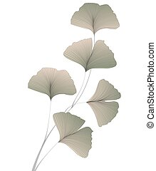 Ginkgo biloba leaves - Vector illustration of ginkgo biloba...