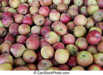 Macintosh Apples - Fresh apple crop from the British...