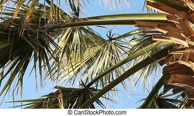 Palm tree - Moving palm tree leaves.