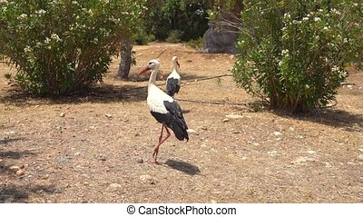 Exotic birds walking in a park on Cyprus island - Beautiful...