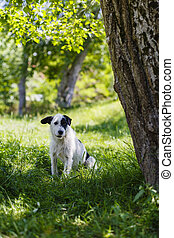 Portrait with a dog sitting in the grass