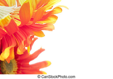 Red and Yellow Gerbera Daisy Background - Soft focus...