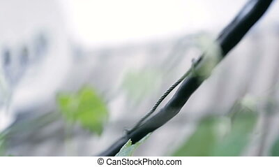 Black wire hanging and it's raining, close up - Black wire...