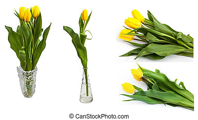 Bright yellow tulips - Set of several images