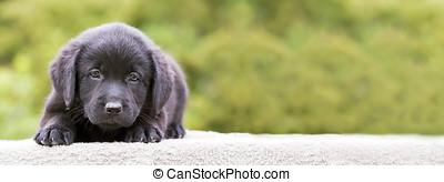 junger Hund,  Banner, hund