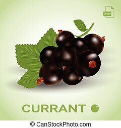 Blackcurrant, Ripe Berries With Green Leaves.