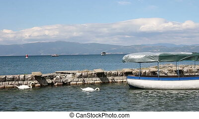 Swans on Lake Ohrid Macedonia
