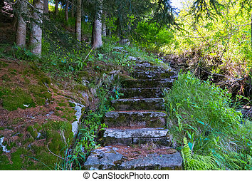 Stone stairs on the forest. Kanton Tessin.