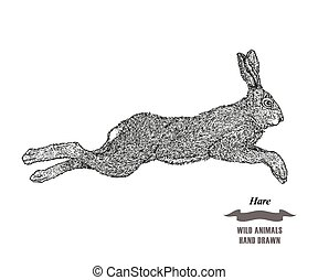 Forest animal jumping hare or rabbit. Hand drawn black ink sketch on white background. Vector illustration engraving style.