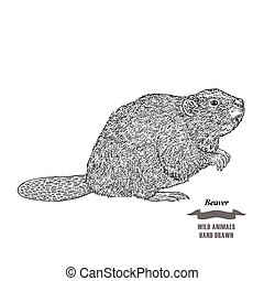 Forest animal beaver. Hand drawn black ink sketch on white...