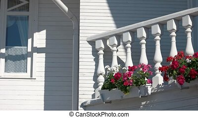 Petunias on the balcony. Plants and white wall. Flower care...
