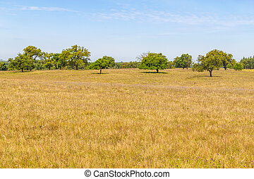 Cork trees in a farm plantation in Vale Seco, Santiago do...