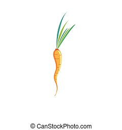 Vector sign of bright carrots