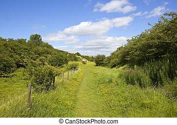 yorkshire wolds nature reserve - a summer nature reserve in...