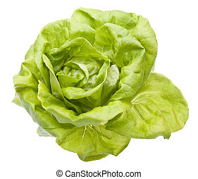 Hydroponic Bibb Lettuce Isolated on White.