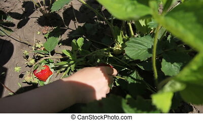 Delicious strawberry in the small hands - Very delicious...