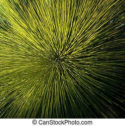 Grass Tree Detail - Grass Tree xanthorrhoea or black boy...