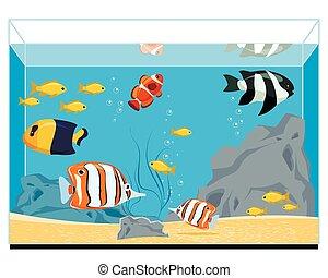 Exotic fishes in aquarium