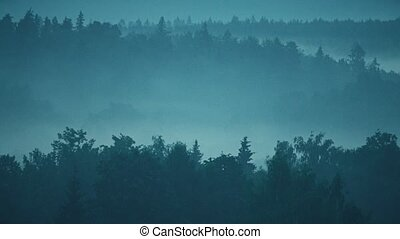 Mysterious fog in the evening forest - Fog in the evening...
