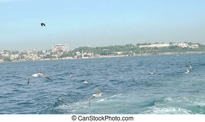 Seagull flying over sea in slow motion. City landscape
