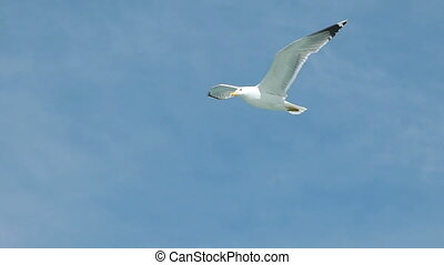 Seagull Flying High In The Sky in slow motion - Seagull...