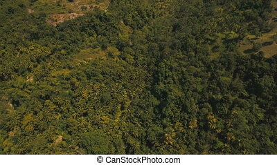 Mountains with tropical forest. Philippines Cebu island. -...