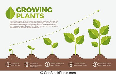 Different steps of growing plants. Vector illustration in cartoon style