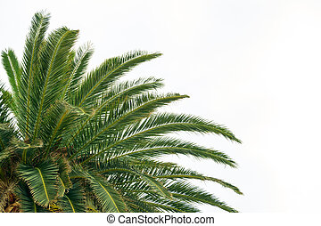 Palm Tree Crown on Bright Sky Background. Summer Vacation Concept.