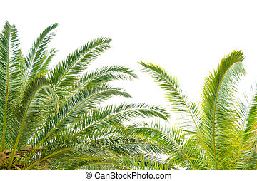 Palm Tree Leafs on Bright Sky Background. Summer Vacation Concept.