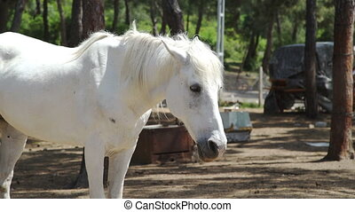 White Horse standing against forest. Close up