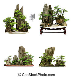 collection of the best china bonsai with white isolated...