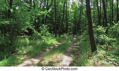 Tourist walking dirt path through a green forest