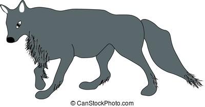 Close seasoned gray wolf. - Close seasoned gray wolf on a...
