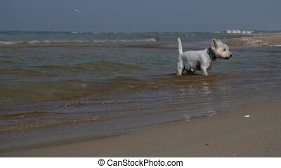 Dog is playing at the beach
