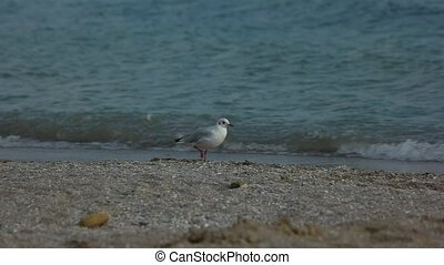 Seagulls on the shore. Gulls near water. Metabolism and...
