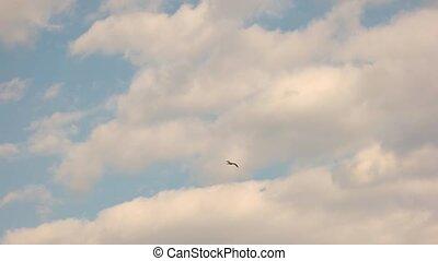 Bird flying in slow motion. Gull in the sky.
