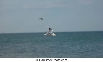 Bird landing on seashore. - Gull in slow motion. Bird...