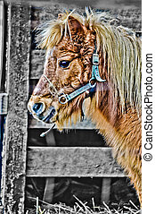 portrait of miniature horse