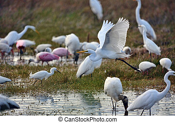 Migrating birds in the Everglades